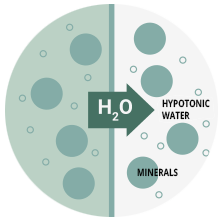 Hypotonic water