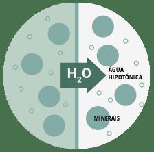 Água hipotónica